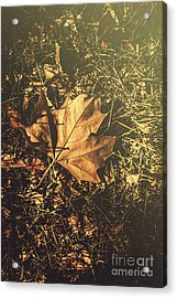 Acrylic Print featuring the photograph Autumn In Narrandera by Jorgo Photography - Wall Art Gallery