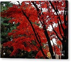 Autumn In New England Acrylic Print by Melissa A Benson
