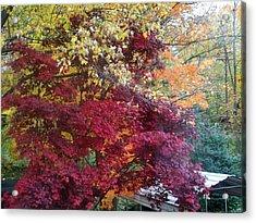 Autumn In October Acrylic Print by Misty VanPool
