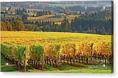 Autumn In Oregon Wine Country Acrylic Print