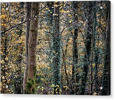 Autumn In Rawtenstall Woods Acrylic Print
