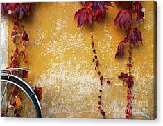 Acrylic Print featuring the photograph Autumn In Red by Yuri Santin