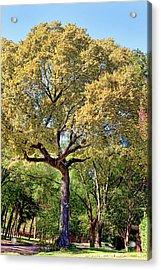 Autumn In Summer Acrylic Print by Joan Bertucci