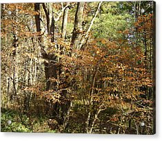 Autumn In The Country Acrylic Print by Paula Prindle
