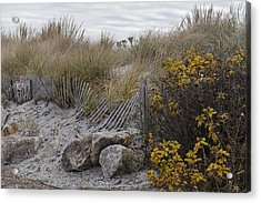 Autumn In The Dunes Acrylic Print by Andrew Pacheco