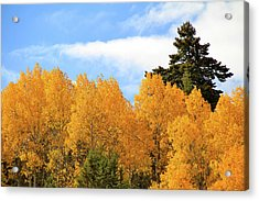 Autumn In The Owyhee Mountains Acrylic Print