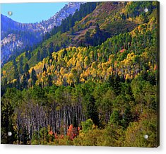 Autumn In Utah Acrylic Print