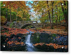 Autumn In Vaughan Woods Acrylic Print