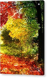 Autumn In Vermont Acrylic Print by Mindy Sommers