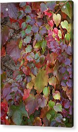 Autumn Ivy Acrylic Print by Jessica Rose