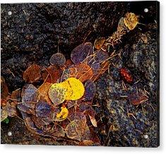 Autumn Jewels.. Acrylic Print by Al  Swasey