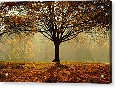 Autumn Acrylic Print by Kobby Dagan