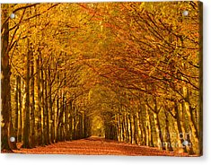 Autumn Lane In An Orange Forest Acrylic Print