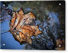 Acrylic Print featuring the photograph Autumn Leaf by Debra and Dave Vanderlaan