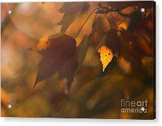 Autumn Leaf In Sunshine Acrylic Print by Diane Diederich