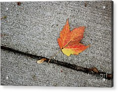 Autumn Leaf Acrylic Print