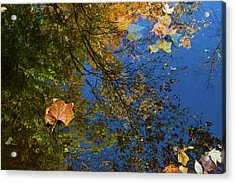 Acrylic Print featuring the photograph Autumn Leaf Reflections by Lon Dittrick