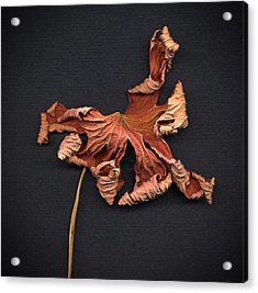 Acrylic Print featuring the photograph Autumn Leaf by Vladimir Kholostykh