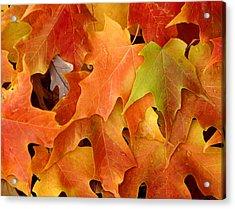 Autumn Leaves - Foliage Acrylic Print by Dmitriy Margolin