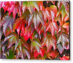 Autumn Leaves 01 Acrylic Print