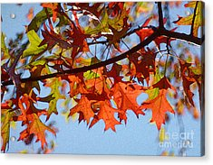 Autumn Leaves 16 Acrylic Print