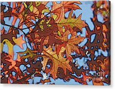 Autumn Leaves 17 - Variation  2 Acrylic Print by Jean Bernard Roussilhe