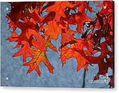 Autumn Leaves 19 Acrylic Print by Jean Bernard Roussilhe