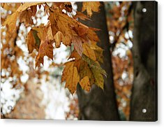 Autumn Leaves 2- By Linda Woods Acrylic Print