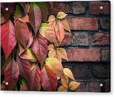 Acrylic Print featuring the photograph Autumn Leaves Against Brick Wall by Julie Palencia