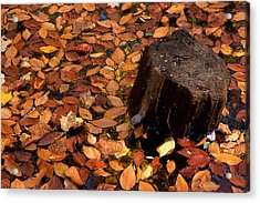 Autumn Leaves And Tree Stump Acrylic Print by Barry Shaffer