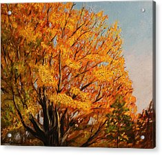Autumn Leaves At High Cliff Acrylic Print by Daniel W Green