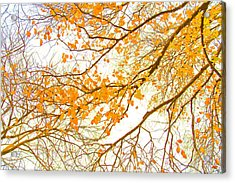 Autumn Leaves Acrylic Print by Az Jackson