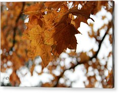 Autumn Leaves- By Linda Woods Acrylic Print