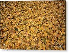 Autumn Leaves Canvas Acrylic Print by Carol Groenen