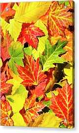 Acrylic Print featuring the photograph Autumn Leaves by Christina Rollo