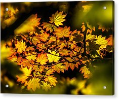 Acrylic Print featuring the photograph Autumn Leaves by Claudia Abbott