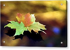 Autumn Leaves  Acrylic Print by Dmitriy Margolin