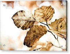 Autumn Leaves Acrylic Print by Frank Tschakert