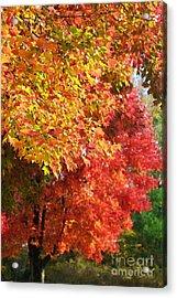 Autumn Leaves Acrylic Print by Hideaki Sakurai