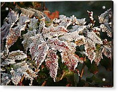 Autumn Leaves In A Frozen Winter World Acrylic Print by Christine Till