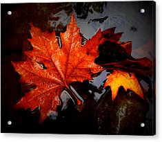 Autumn Leaves In Tumut Acrylic Print by Lexa Harpell