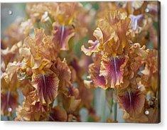 Autumn Leaves Irises In Garden Acrylic Print