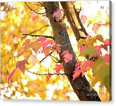 Acrylic Print featuring the photograph Autumn Leaves by Ivy Ho