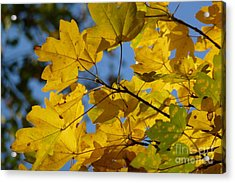 Acrylic Print featuring the photograph Autumn Leaves by Jean Bernard Roussilhe