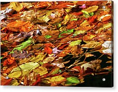 Acrylic Print featuring the photograph Autumn Leaves by Mitch Cat