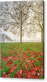 Acrylic Print featuring the photograph Autumn Leaves Near To Far Super High Resolution by William Lee
