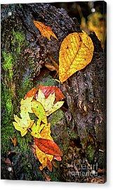 Autumn Leaves On Mossy Tree Trunk Acrylic Print by Dan Carmichael