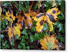 Autumn Leaves On The Ground Acrylic Print by Sami Sarkis