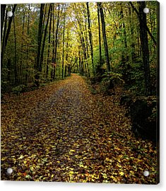 Acrylic Print featuring the photograph Autumn Leaves On The Trail by David Patterson