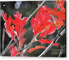Acrylic Print featuring the photograph Autumn Leaves by Peggy Hughes